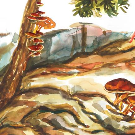 Lapis Fungus – 60 sobres