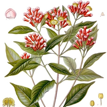 Spagyric Plants